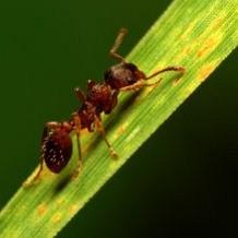 Myrer – Bekæmpelse af myrer