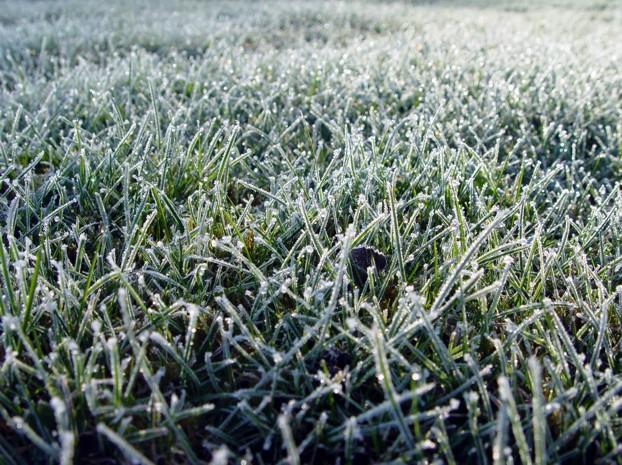 Gør græsplænen klar til vinter