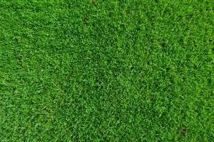 Tips til at få den grønneste græsplæne