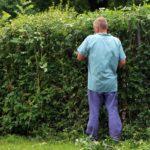 Hækkeklipper og hækklipning – vælg det rigtige udstyr